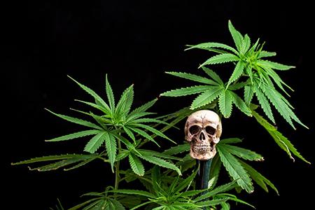 Методы лечения от марихуаны перелив марихуаны фото